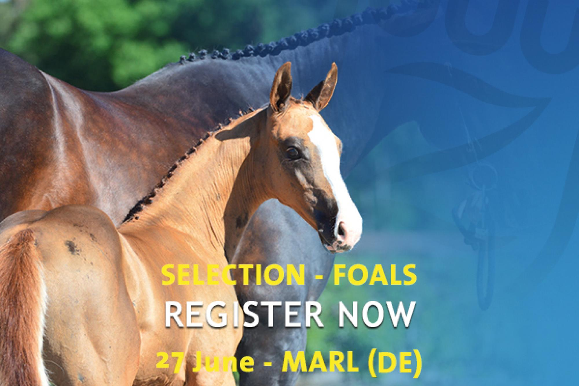 Auction Selection - Marl (Germany)